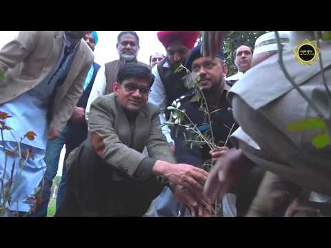 550 Gurupurb Preparation Nankana Sahib! Tree 🌲 Planning Initiative by Punjabi Lehar